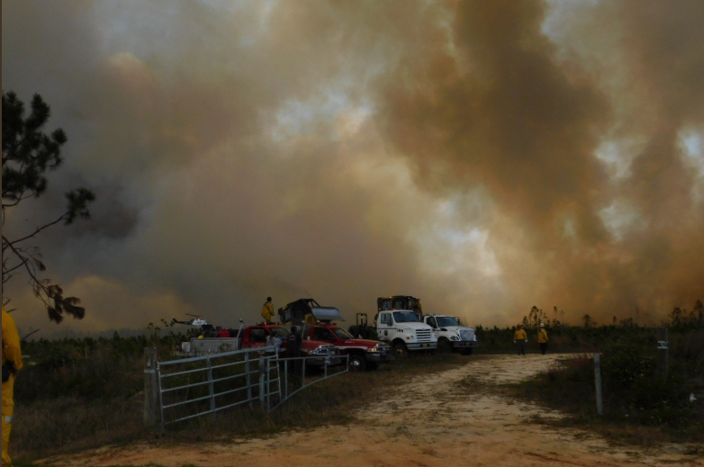 Wildfire Outbreak in Florida Forces Evacuations